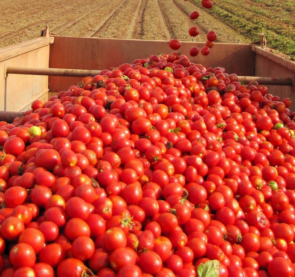 Tomato Paste Sales Manager