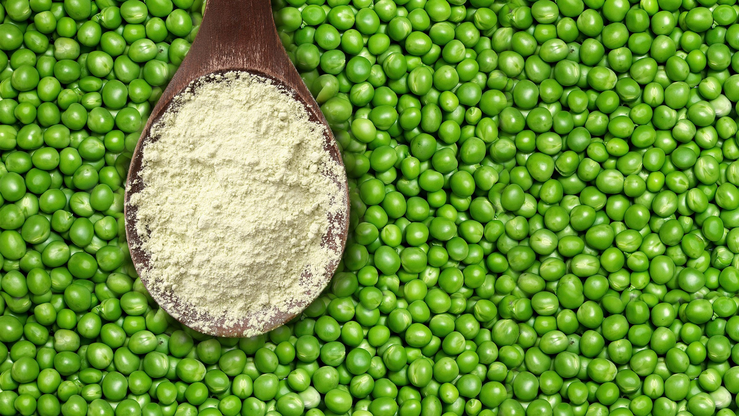 pea-protein – powder_tcm11-41372